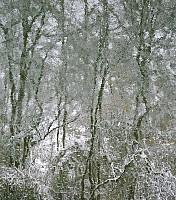 Schneeherbst 15 2012