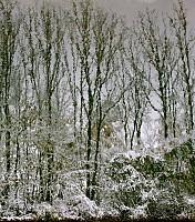 Schneeherbst 26 2012