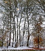 Schneeherbst 7 2012